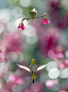 Nature photography bokeh birds
