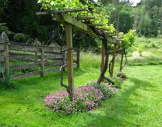 Grape vine trellis - Creative DIY ideas for support climbing vegetables, plants and flowers – Grape vine trellis Grape Tree, Grape Plant, Grape Vine Trellis, Grape Vines, Backyard Vineyard, Grape Vineyard, Vineyard Vines, Grape Arbor, Arbors Trellis