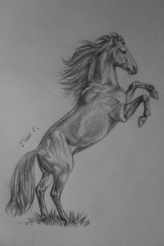 Pencil Drawing Techniques horse drawings by WhySoWhite - Easy Horse Drawing, Horse Pencil Drawing, Realistic Pencil Drawings, Horse Drawings, Pencil Art Drawings, Animal Drawings, Drawing Sketches, Horse Sketch, Animal Sketches