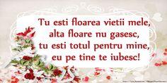 Felicitari Ziua indragostitilor - Tu esti floarea vietii mele, alta floare nu gasesc, tu esti totul pentru mine, eu pe tine te iubesc! - mesajeurarifelicitari.com