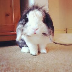 Bunny doesn't need hair products to make his fur stick up like this - December 15, 2012