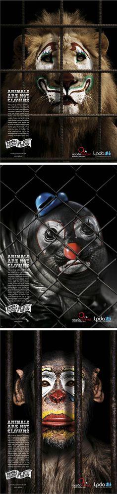 Animals are not clowns!!! No vayas al circo!! Muchos de estos pobres animalitos han pasado la mayor parte de su vida encerrados... Boicot a los circos para q dejen de utilizar animales!!!