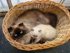 .momma kitty & kitten.