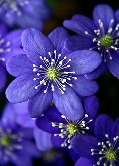 An amazing merical: flowers