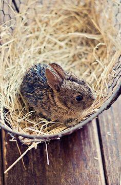 Cute Creatures, Beautiful Creatures, Animals Beautiful, Cute Baby Animals, Animals And Pets, Funny Animals, Baby Bunnies, Cute Bunny, Tiny Bunny