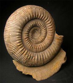 46 Ideas De Fosiles En 2021 Fosiles Paleontología Fósil