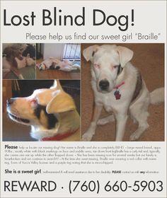 #Blind #dog missing in #Riverside / #DesertHotSprings area of #CA! PLZ RT! #Help #find #Braille! #Reward