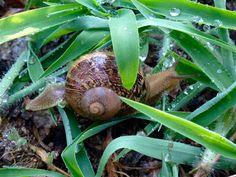 Elogio alla lentezza dopo una pioggia mattutina, ci prepariamo per una nuova campagna agrumicola e olivicola