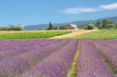 Wegdromen in het Franse landschap