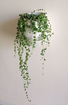 Somewhere I would like to live: String of pearls