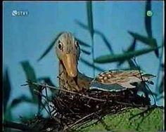 Macko Usko - Cajka - YouTube Owl, Bird, Youtube, Animals, Animales, Animaux, Owls, Animais, Birds