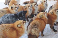 Au Japon, un village entièrement peuplé de renards remporte le concours du lieu le plus mignon de la planète !