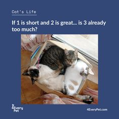 "There are times when we look at our pet and think ""What a great life"" or just smile ... Share with us these special moments!  Send photos by private message to 4EveryPet and see your best friend next week's edition!  #4EveryPet #CatLife"
