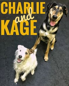 Charlie and Kage looking amazing.  Come and join in the fun daycare is open Mon-Fri.  Contact us to get your puppers in to have some good times with our friendly staff and our social regulars.  250-521-2275 www.bnrbc.ca 1208 Pine Ave. Trail BC . Sign up online at: http://ift.tt/2EPICrW . #barksnrecbcdaycare #bnrbc #dog #dogdaycare #instadog #dogsofig #dogsofinstagram #trailbc #bc #canada #kootenays #kootenaydog #dogtraining #grooming #cute #dogsmile  #ilovemydog #pet #petservices #petstore…
