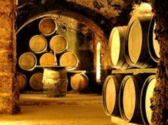 Enology  (wine making) For One Day, Private Service. Excursions in Mendoza  Wine from Argentina. Visit the Mendoza wine making region. #wine #winemaking #mendoza #argentina #excursions #justbookexcursions