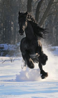 If i could have one wish in the whole world it would be to have a beautiful black fresian named Cash<33