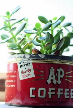 succulents in vintage coffee cans.
