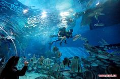 fish museum - Google Search