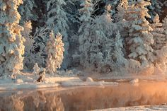 Hiver Picea Neige Nature