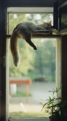 I love the way cats can make themselves comfortable absolutely anywhere. Would that I be so versatile (and flexible)!