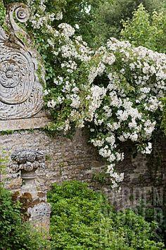 Climbing roses on stone wall at Chateau de Brecy Moon Garden, Dream Garden, Garden Art, Garden Design, Side Garden, Beautiful Gardens, Beautiful Flowers, Enchanted Garden, Climbing Roses