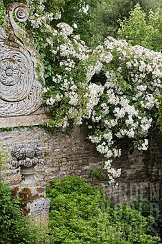 ~climbing roses on stone wall