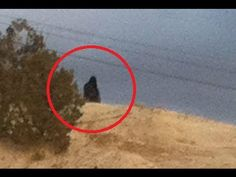 http://india.mycityportal.net - Strange Bigfoot Sighting On Navajo Indian Reservation - #india