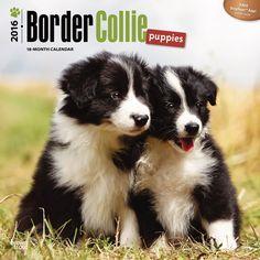 Border Collie Puppies Calendar 2016