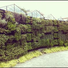 127 Best Green Walls + Vertical Gardens Images On Pinterest | Vertical  Gardens, Home Decor And Landscaping