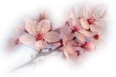 - Fleurs non classées - - La Passion des tubes PSP