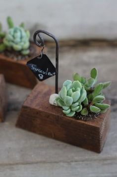 Miniature dollhouse plants for a gardenThis post was discovered by Ma Succulent Arrangements, Cacti And Succulents, Planting Succulents, Planting Flowers, Succulent Gifts, Succulent Gardening, Decoration Plante, Small Wood Projects, House Plants Decor