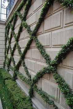 Espalier style shrubs   Flickr - Photo Sharing! - Disneyland main street station.
