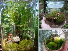 As someone who loves plants but unfortunately suffers from having a black thumb (I manage to kill even cacti -sob-), I'm always looking out . Moss Terrarium, Terrariums, Garden Plants, I Am Awesome, Ferns, Mushroom, Google Search, Inspiration, Gardens