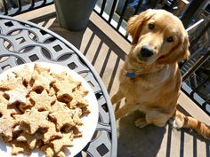 A Squared: Healthy Puppy Parenting with Purina® Pro Plan® + Homemade Dog Treat recipe #proplanpet #collectivebias #ad