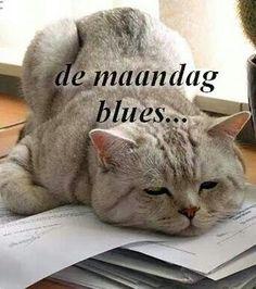 De maandag blues