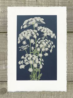 Hannah McVicar | Portfolio Queen Annes Lace, Floral Illustrations, Natural Forms, Flower Seeds, Printmaking, Japanese, Artwork, Nature, Flowers