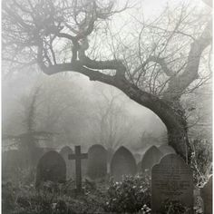 Creepy foggy cemetery with crooked tree