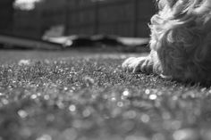 Dogs, Animals, Animaux, Doggies, Animal, Animales, Pet Dogs, Dog, Animais