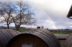 Rainbow - (c) 2008 jon phillips