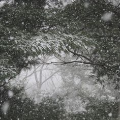 Window in the Pines..