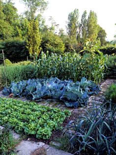 Vegetable Garden. Even in a large garden, planting in groupings like this would make sense.