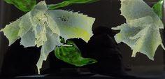 Alcohol ink 3x6 tile Deb Boudreau -Sleepless Nights Art