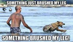 nice Dog Memes That Are Too Freaking Hilarious (46+ Pictures) This is so me!!!
