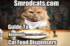 Why You Should Get An Automatic Cat Food Dispenser And What To Look For. Read On http://smrodcats.com/food/automatic-cat-feeder-guide