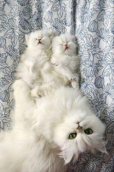 母猫に見守られて幸せそうに眠るプチにゃんたち