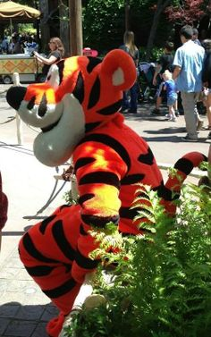 Spotted: Tigger hanging out on the streets of Disneyland!