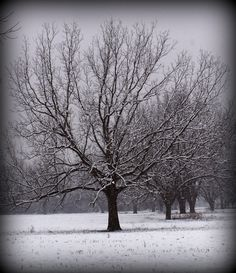 Snow on Spadra Trail, Clarksville, Ark