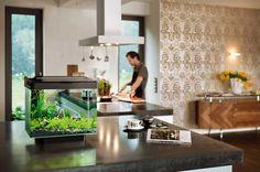 ¿Cómo poner en funcionamiento un acuario doméstico? http://www.mascotadomestica.com/articulos-de-peces/como-poner-en-funcionamiento-un-acuario-domestico.html