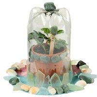 Recycle a two liter soda bottle into your own Bottle Terrarium. Kids love to watch things grow and this is a pretty scientific project. Garden Crafts For Kids, Summer Camp Crafts, Camping Crafts, Camping Ideas, Science Crafts, Craft Activities For Kids, Craft Ideas, Bottle Terrarium, Terrariums