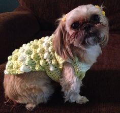Shih-tzu in her yellow crochet sweater  Makes me want to crochet again
